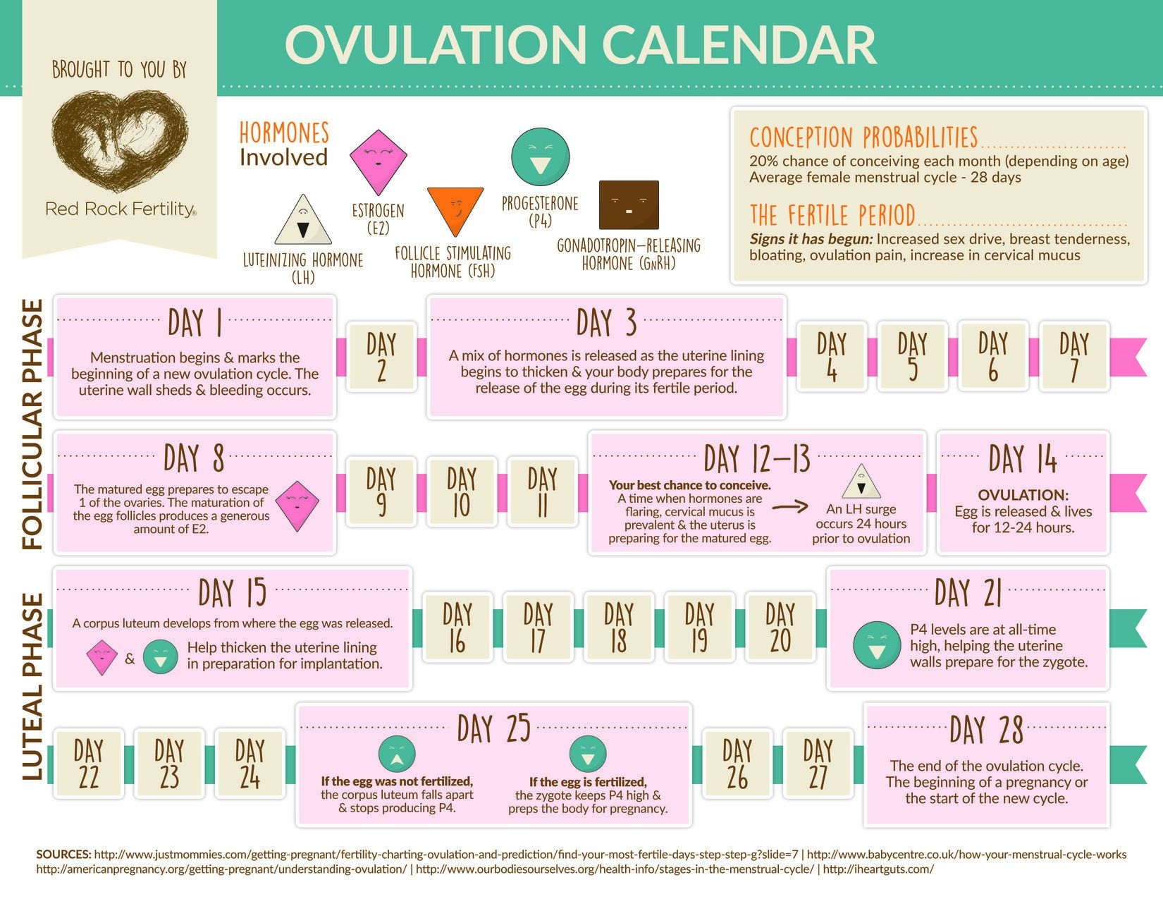 what you need to know about your ovulation cycle [infographic]