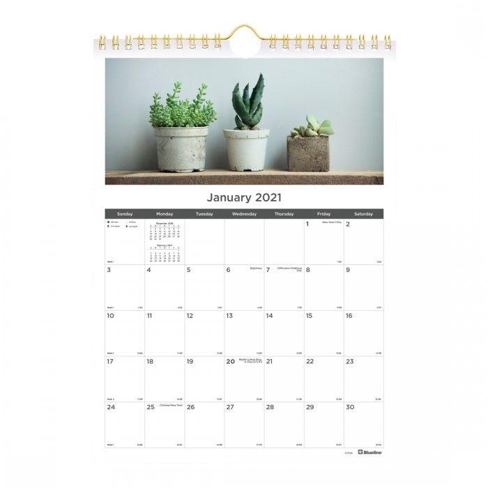 monthly wall calendar, succulent plants design 2021 | rediform