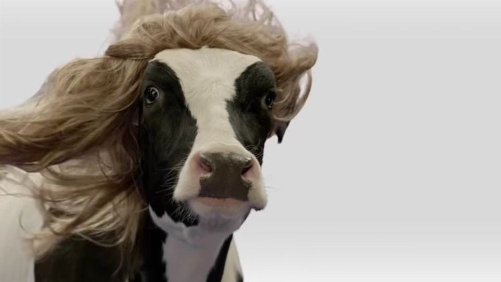 what you never knew about the chick fil a cow mascots
